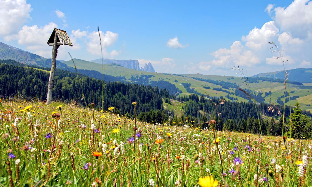 The Alpe di Siusi – the largest and most beautiful mountain plateau in Europe